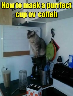 How to maek a purrfect cup ov  coffeh