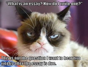 """""""What is an essay? How do I write one?""""  This is not the question I want to hear two weeks after the essay is due."""