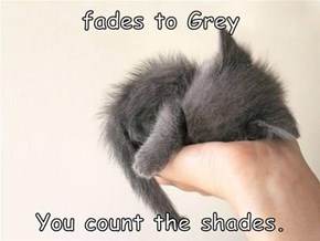 fades to Grey  You count the shades.