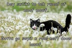 Dey swtikt to teh rwoof uf moof mowf.   Gotta go swpit n rowl neft doow lawnf.