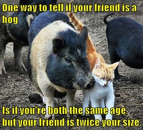 One way to tell if your friend is a hog  Is if you're both the same age, but your friend is twice your size.