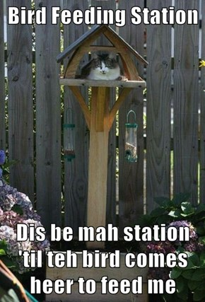 Bird Feeding Station  Dis be mah station 'til teh bird comes heer to feed me