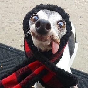 Sid Dog