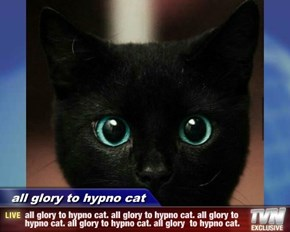 all glory to hypno cat - all glory to hypno cat. all glory to hypno cat. all glory to hypno cat. all glory to hypno cat. all glory  to hypno cat.