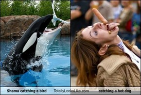 Shamu catching a bird Totally Looks Like catching a hot dog