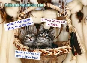 California cats discuss rain