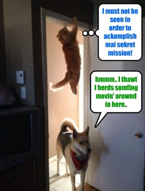 Teh Unknoed Kitteh easily evades a highly trained sekurity goggie!