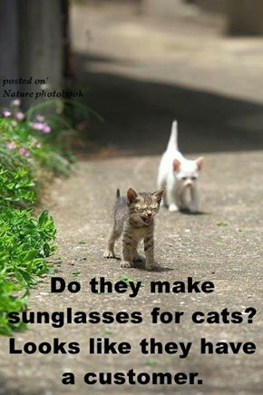 Do they make sunglasses for cats? Looks like they have a customer.