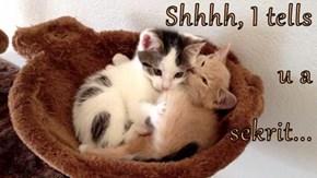 Shhhh, I tells u a sekrit...
