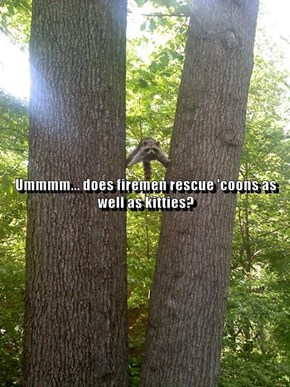 Ummmm... does firemen rescue 'coons as well as kitties?