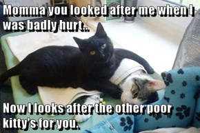 Momma you looked after me when I was badly hurt..   Now I looks after the other poor kitty's for you.