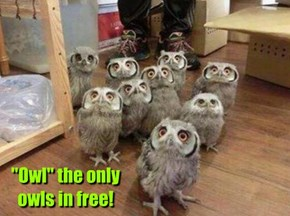 """Owl"" the only owls in free!"