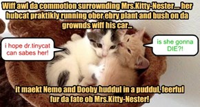 Nemo and Dooby has a kunfoozal abowt Mrs.Kitty-Nester's kundishun!