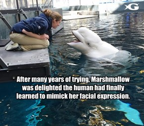 After many years of trying, Marshmallow was delighted the human had finally learned to mimick her facial expression.