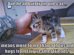 One head butt from one cat ...  means more to me than a thousand hugs from fair weather friends!