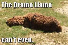 The Drama Llama  can't even.