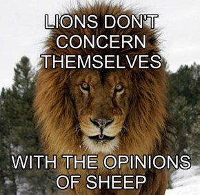 LIONS DON'T CONCERN THEMSELVES      WITH THE OPINIONS OF SHEEP