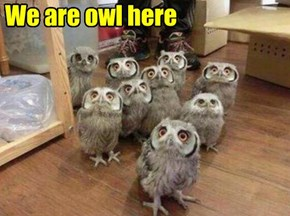We are owl here