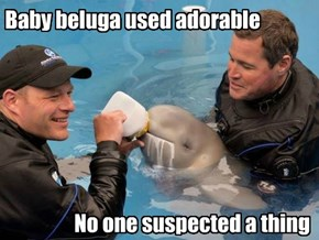 Baby beluga used adorable