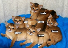 How to name brown cats!