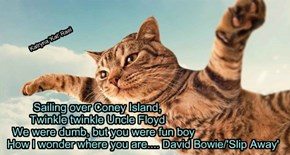 Sailing over Coney Island,   Twinkle twinkle Uncle Floyd     We were dumb, but you were fun boy                               How I wonder where you are.... David Bowie/'Slip Away'