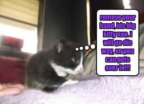 KITTY WIFF AN ATTITOOD.