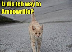 Iz dis teh way to Ameowrillo?