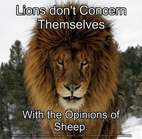 Lions don't Concern Themselves