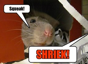 We found a rat in the basement and then my girlfriend won a contest with him to see who could scream the loudest