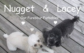 Our Precious Furbabies 5/18/2015