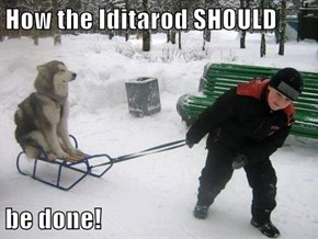 How the Iditarod SHOULD  be done!