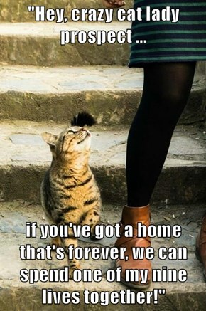 """""""Hey, crazy cat lady prospect ...  if you've got a home that's forever, we can spend one of my nine lives together!"""""""