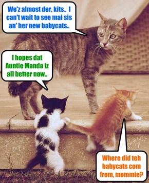 Sahara brings her preshush kitties Nemo an' Dooby to bisit Auntie Manda at teh Ali Katt Memorial Hospitals..