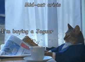 Mid-cat crisis I'm buying a Jaguar
