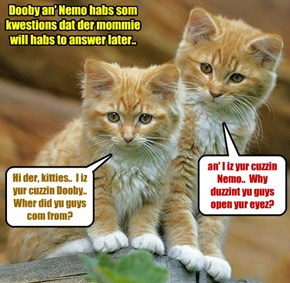 Nemo an' Dooby see Auntie Manda's new babycats for teh first time..