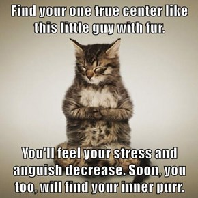 Find your one true center like this little guy with fur.  You'll feel your stress and anguish decrease. Soon, you too, will find your inner purr.