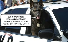 Paw Enforcement: Canine Division