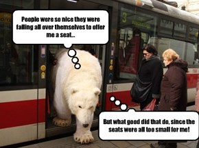 Plus sized people have the same problem as this polar bear.