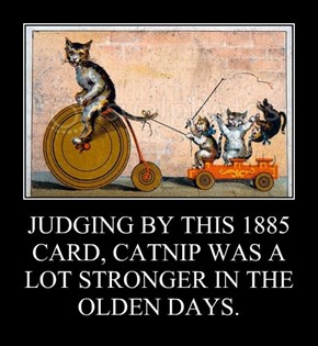 JUDGING BY THIS 1885 CARD, CATNIP WAS A LOT STRONGER IN THE OLDEN DAYS.