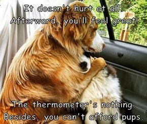It doesn't hurt at all. Afterward, you'll feel great!   The thermometer's nothing. Besides, you can't afford pups.