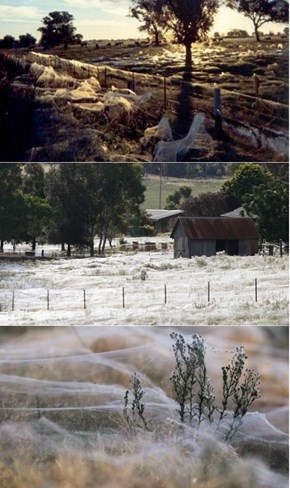 It Literally Rained Spiders in (Where Else) Australia. Can We Set the Sky on Fire Now?