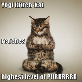 Yogi Kitteh-Kat reaches highest level of PURRRRRR