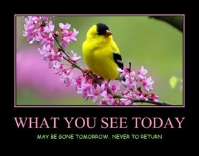 WHAT YOU SEE TODAY
