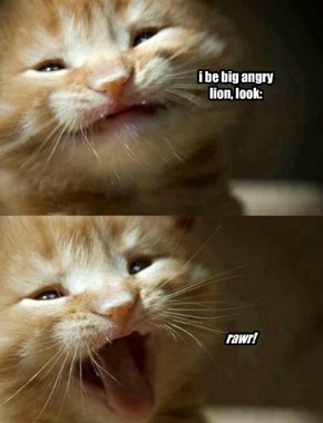 i be big angry lion, look: