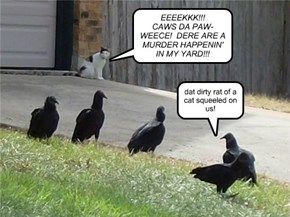 EEEEKKK!!!  CAWS DA PAW-WEECE!  DERE ARE A MURDER HAPPENIN' IN MY YARD!!!