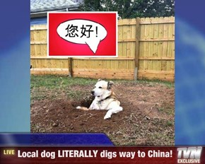 Breaking News - Local dog LITERALLY digs way to China!