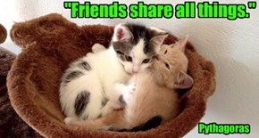 """""""Friends share all things."""""""