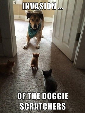INVASION ...  OF THE DOGGIE SCRATCHERS