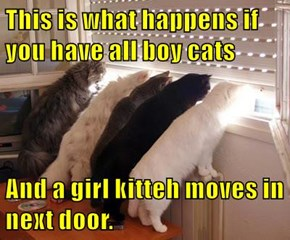 This is what happens if you have all boy cats  And a girl kitteh moves in next door.