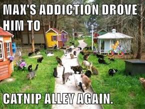 MAX'S ADDICTION DROVE HIM TO  CATNIP ALLEY AGAIN.
